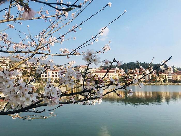 Mùa xuân ở Sapa ngập tràn sắc hoa đào