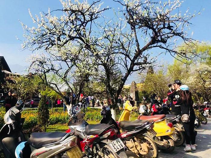 Mùa xuân là mùa hoa mận Sapa