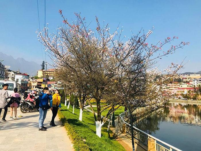 Mùa xuân ở Sapa