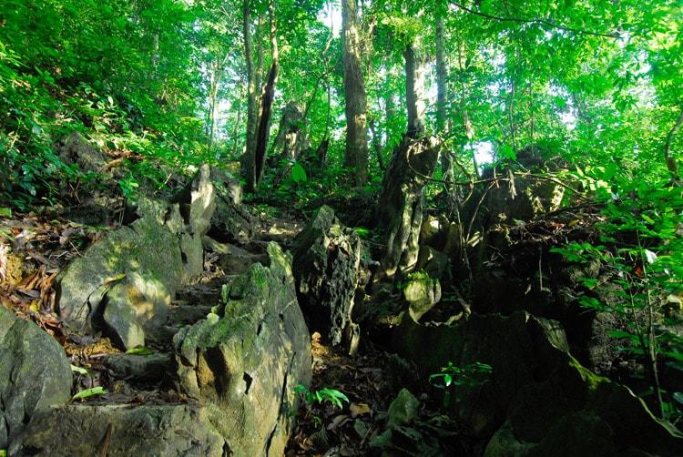 Vườn quốc gia Cúc Phương (Ba Vì)