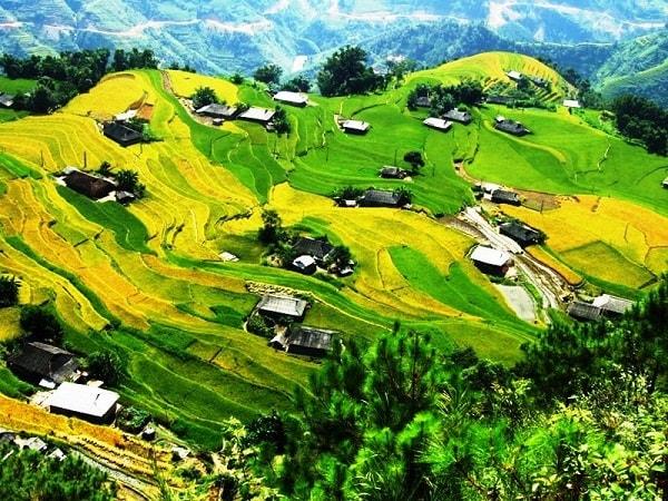 Những cánh đồng lúa vàng óng ở Hoàng Su Phì