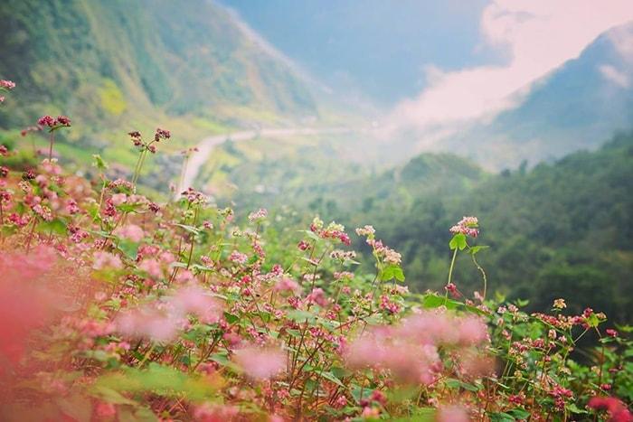 Mùa hoa tam giác mạch nổi tiếng ở Hà Giang