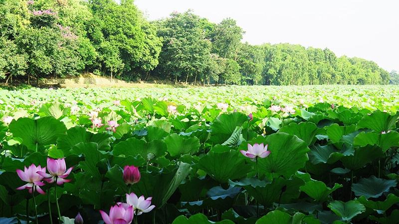 Khu du lịch hồ tự nhiên Bằng Tạ