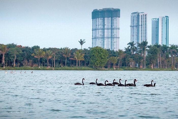 Hồ nước yên bình trong Ecopark
