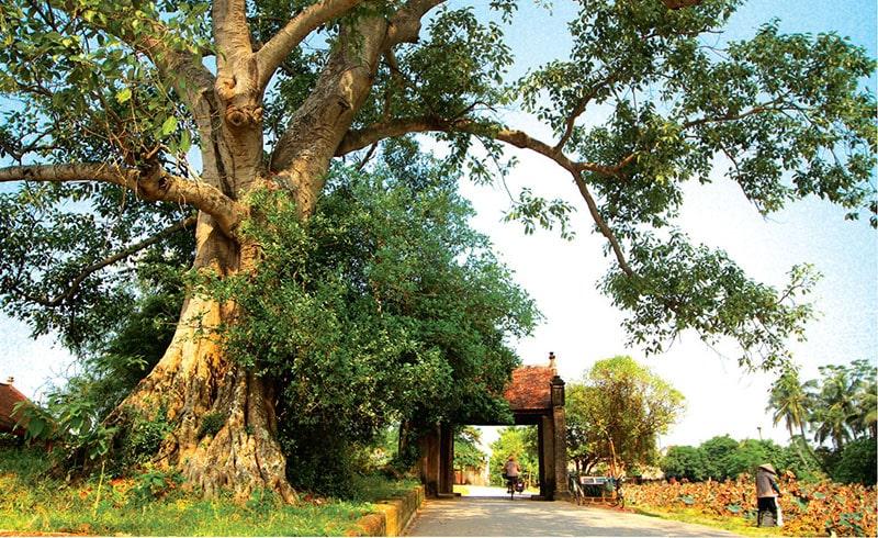 Cổng làng cổ Đường Lâm