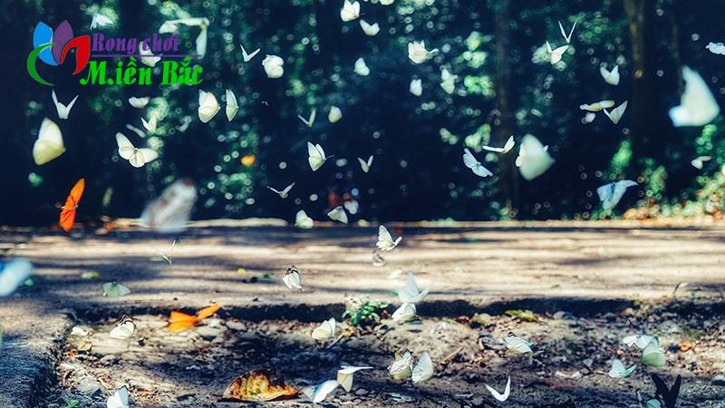 Du lịch Ninh Bình mùa bướm rừng Cúc Phương