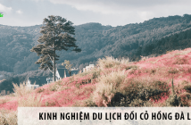 Kinh nghiệm du lịch Đồi cỏ hồng Đà Lạt từ A đến Z