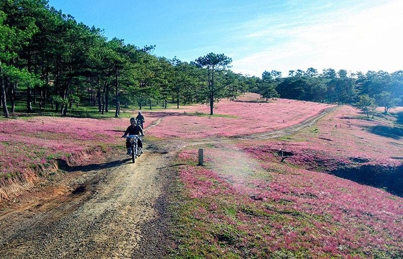 Tại sao lại gọi là Đồi cỏ hồng Đà Lạt?