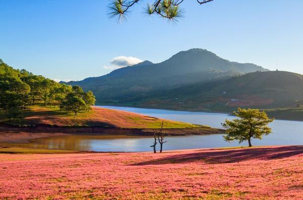 Đồi cỏ hồng Tuyền Lâm Đà Lạt