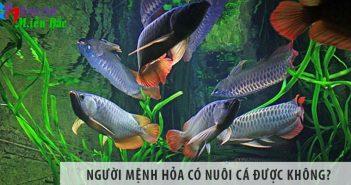Người mệnh Hỏa có nuôi cá được không? Nên nuôi cá gì?