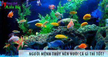 Người mệnh Thủy nên nuôi cá gì thì tốt?